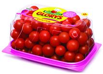 Glorys Tomatoes