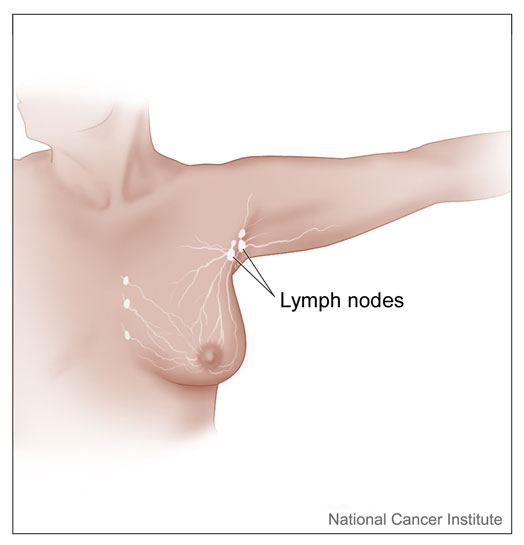 Axillary lymph nodes illustration